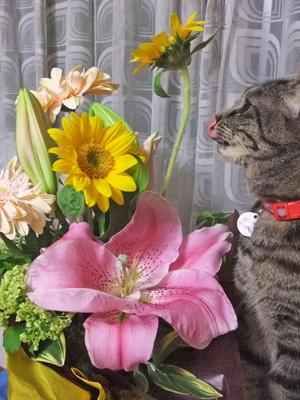 花を愛でる(2)③