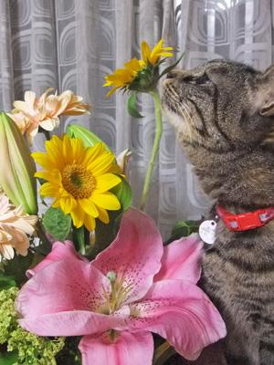 花を愛でる(2)②