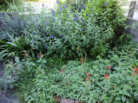 夏の庭①全貌