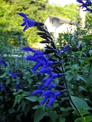 夏の庭②ガラニチカ