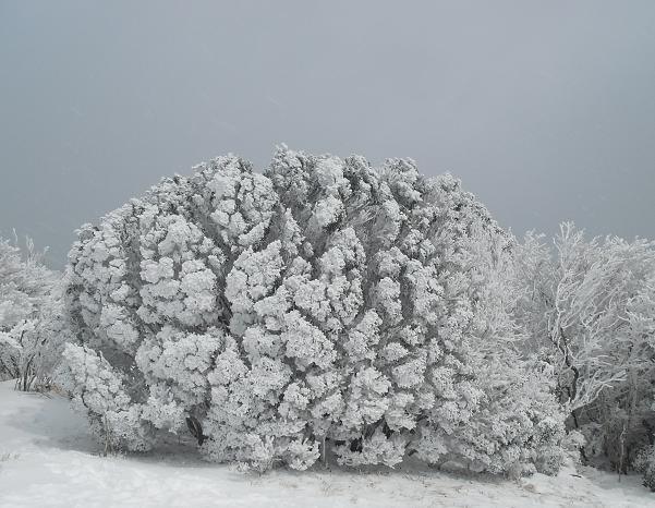 12 八丁平の霧氷