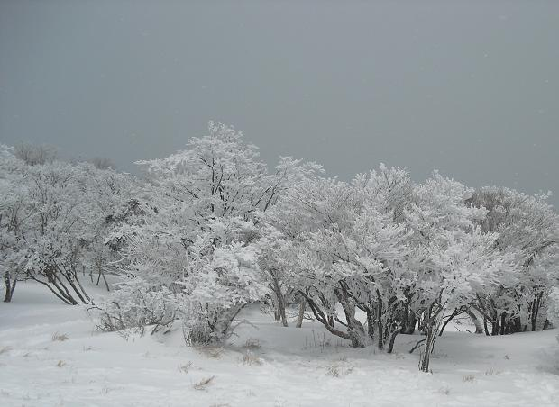 13 八丁平の霧氷