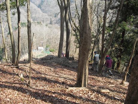7 福寿草を求めて斜面を下る