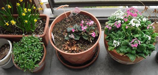 4 ベランダの植物