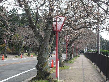 5 石神神宮前・桜並木