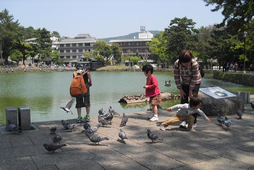 4 猿沢の池にて鳩を追う