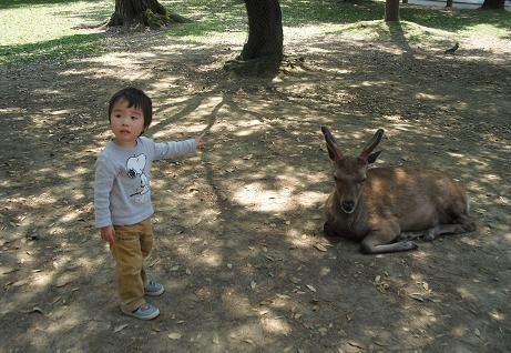 6 奈良公演・鹿に近づく
