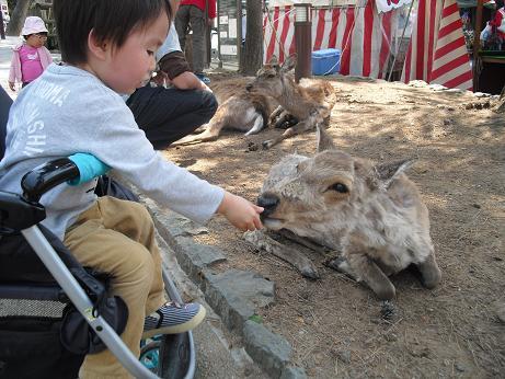 7 奈良公演・鹿に近づく