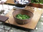 お茶の葉と道具たち
