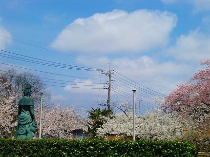 お寺さんの桜。。。12.4.15