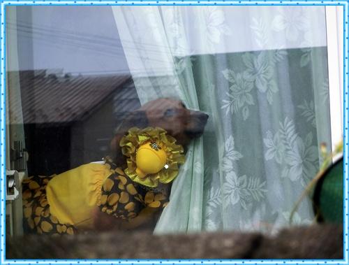 CIMG2262_20121002211247.jpg