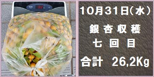 IMG_7808-tile.jpg