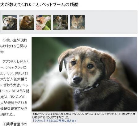 mainichi20017211.jpg
