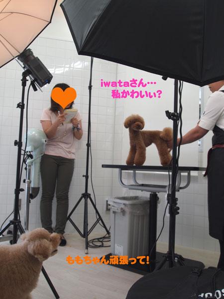 momoroku.jpg