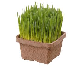 pat-grass.jpg