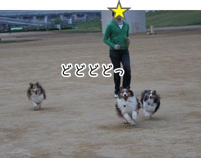 1Img_8325.jpg