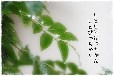 IMG_9462m