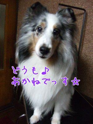 Eho8P6h5.jpg