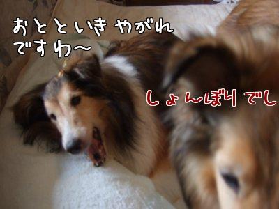 I_VukTdb.jpg