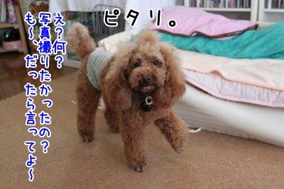 Img_868300.jpg