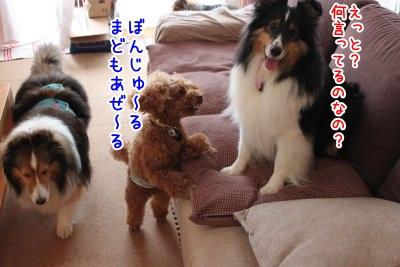 Img_868800.jpg