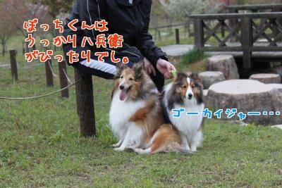 XgVlg.jpg
