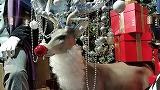 2014のクリスマスディスプレイ