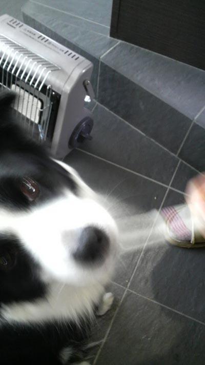 レナちゃんの歯磨き2