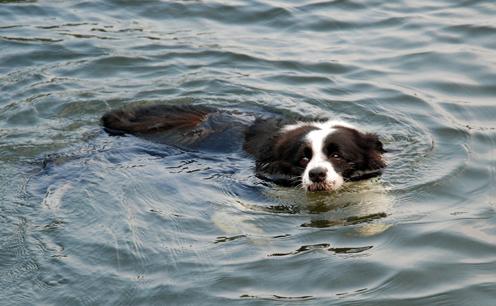 泳ぎが大好きだったミリーさん
