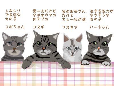 猫たちのプロフィール