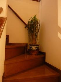 階段の植物