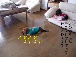 CIMG0631.jpg