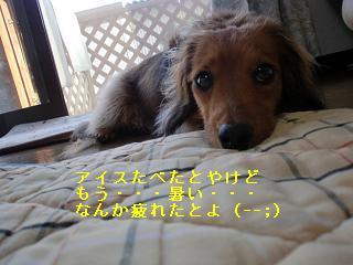 CIMG0678.jpg