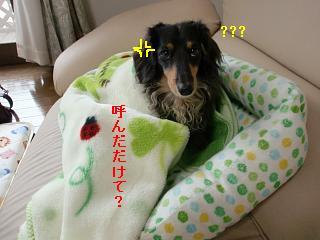 CIMG1063.jpg