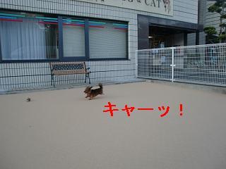 CIMG2454.jpg