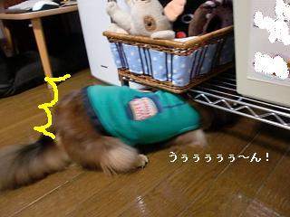 CIMG2720.jpg