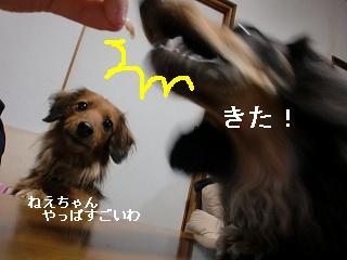 CIMG2960.jpg