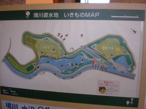 境川遊水地1