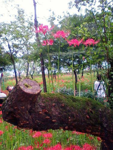 花3木の上