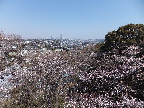 弘明寺公園1