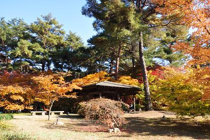 shinrinkoen2013nov007.jpg