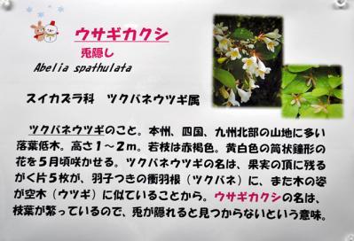 DSC_4453-20110108.jpg