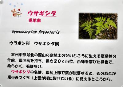 DSC_4454-20110108.jpg