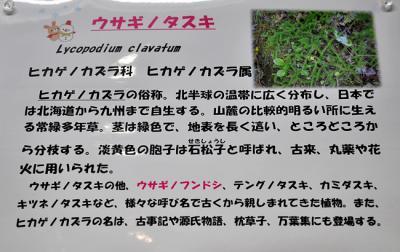 DSC_4455-20110108-3.jpg
