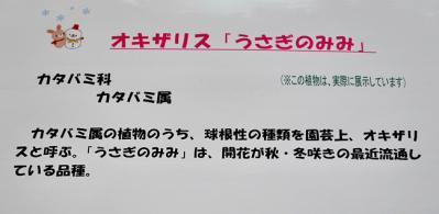 DSC_4464-20110108.jpg