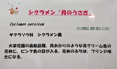 DSC_4467-20110108.jpg