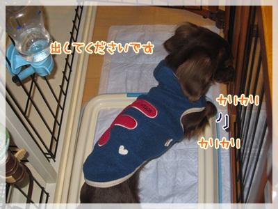 013_20130129103649.jpg