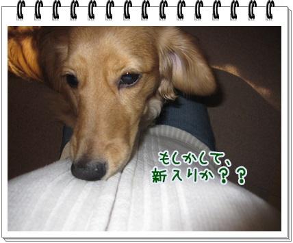 022_20130419201544.jpg