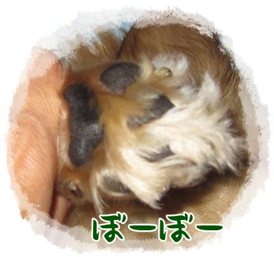 022_20130708122119.jpg