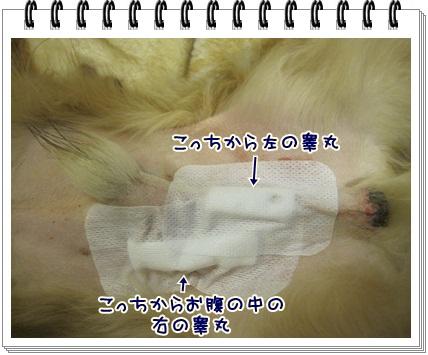 065_20130207204647.jpg